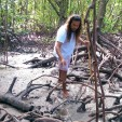In search of mud crabs, turtles and mangrove jack